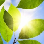 Bionic leaf: Researchers use bacteria to convert solar energy into liquid fuel